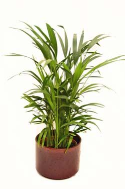 top 10 air purifying house plants. Black Bedroom Furniture Sets. Home Design Ideas