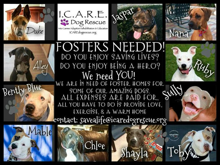 how to find foster homes for dogs