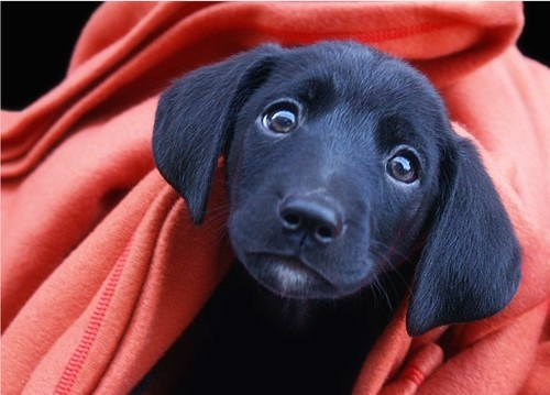 EFFECTIVELY HOUSEBREAKING YOUR PUPPY