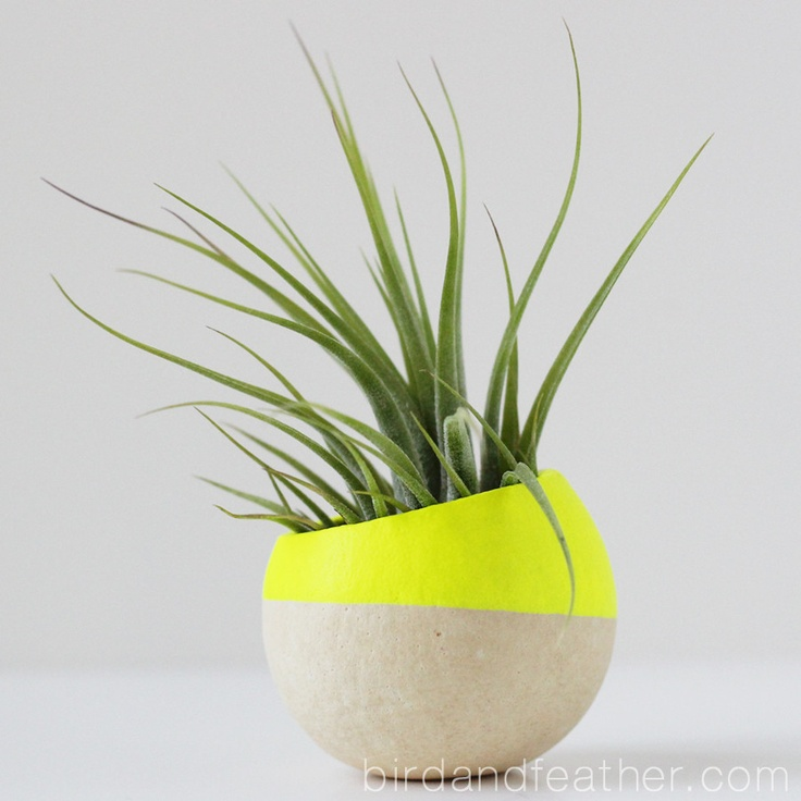 Neon yellow air plant pot with air plant for Air plant planters