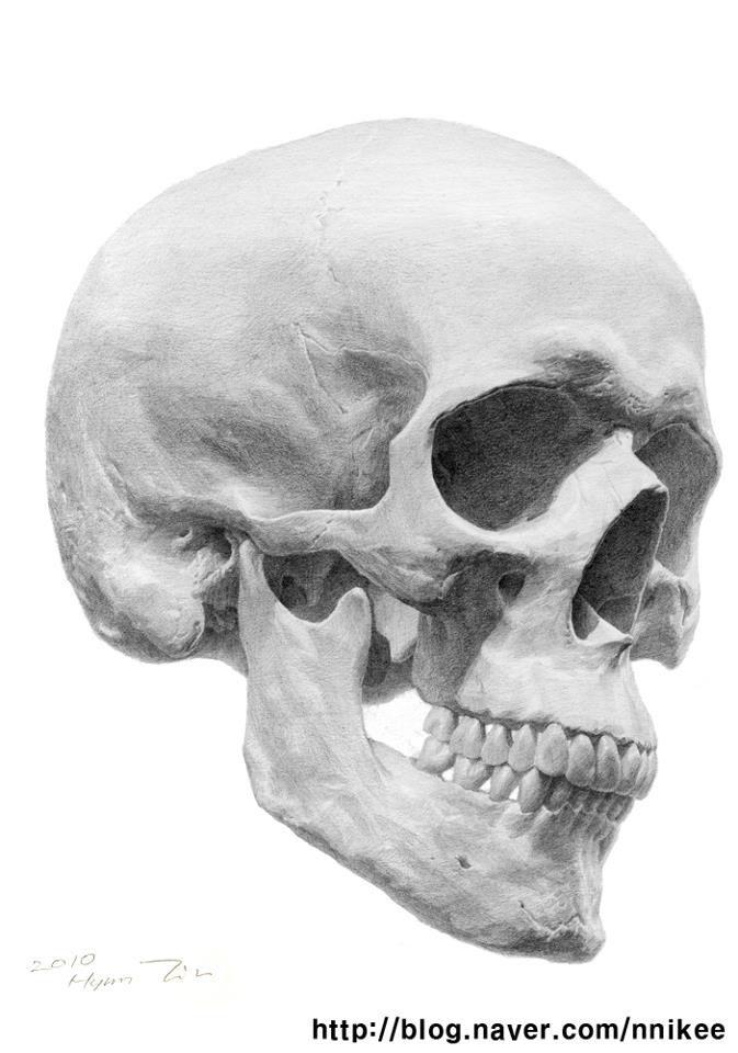 Abstract Anatomy Bones Grayscale Men Muscles Wallpaper - WallDevil