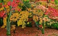 Autumn in England