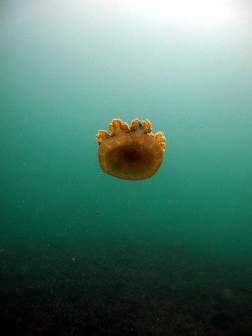 Jailolo Bay Underwater