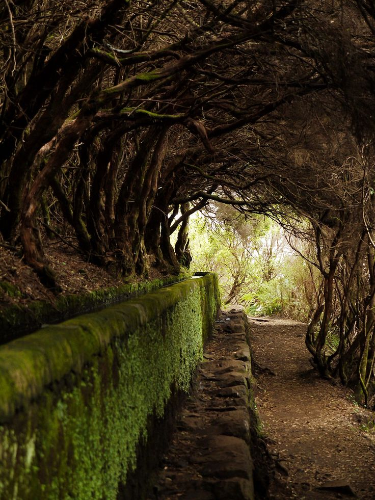 Tree Tunnel And Levada