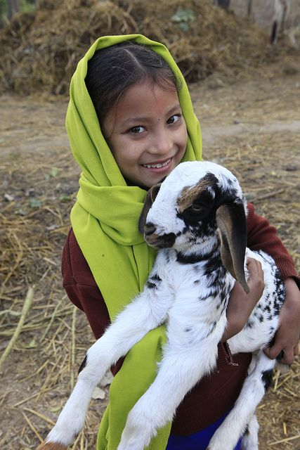 heifer project The purpose of the project is to help youth get a start in the beef cattle business by awarding heifer calves to project participants chosen on the basis of merit, future goals and ability to care for the animal.