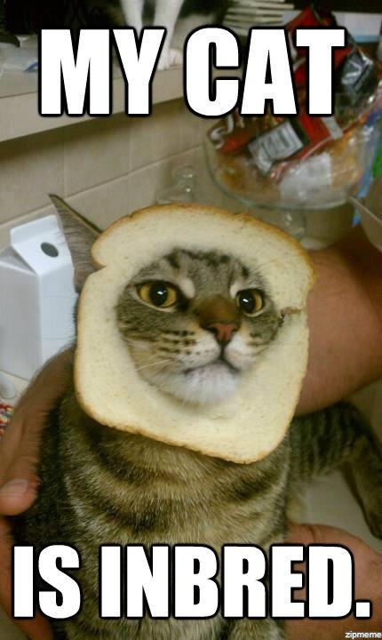 Cat Inbred Crosbythecrazychristmascat