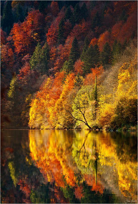 Jesen - fotografije - Page 5 C4f0ce3c40c0805dba96b8c0737f2327