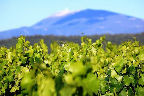Interview d'entrepreneurs #1 : Cave à vin La Fine Goule à Breuillet ( 17 )