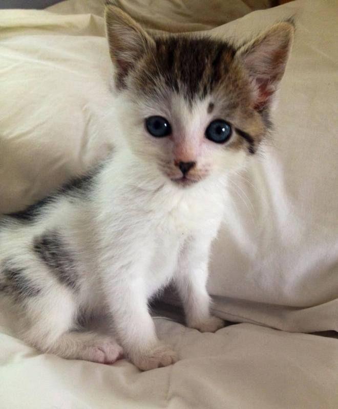 Cat Adoption Descriptions