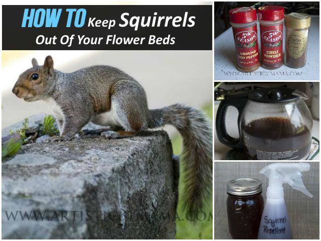 How To Keep Squirrels Out Of Flower Beds 28 Images How To Keep Rats Out Of Your Vegetable