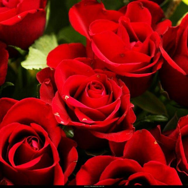 Gülsuyu faydalari sayfamizda http www sifalibitkitedavisi com gul