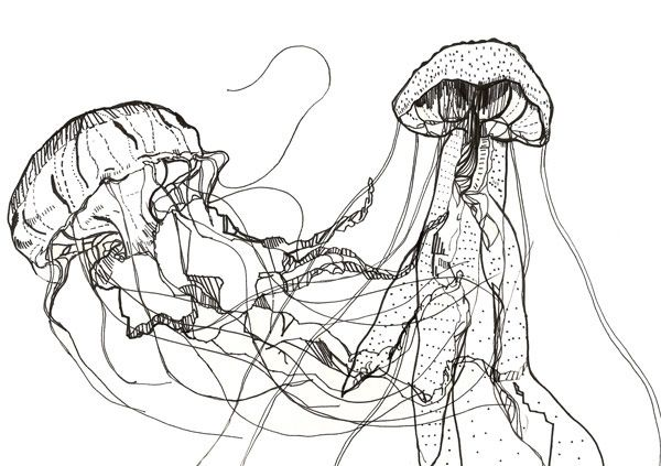 Line Art Jellyfish : Jellyfish drawing art inspiration pinterest