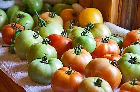 Fried Green Tomato Parmesan | Recipe
