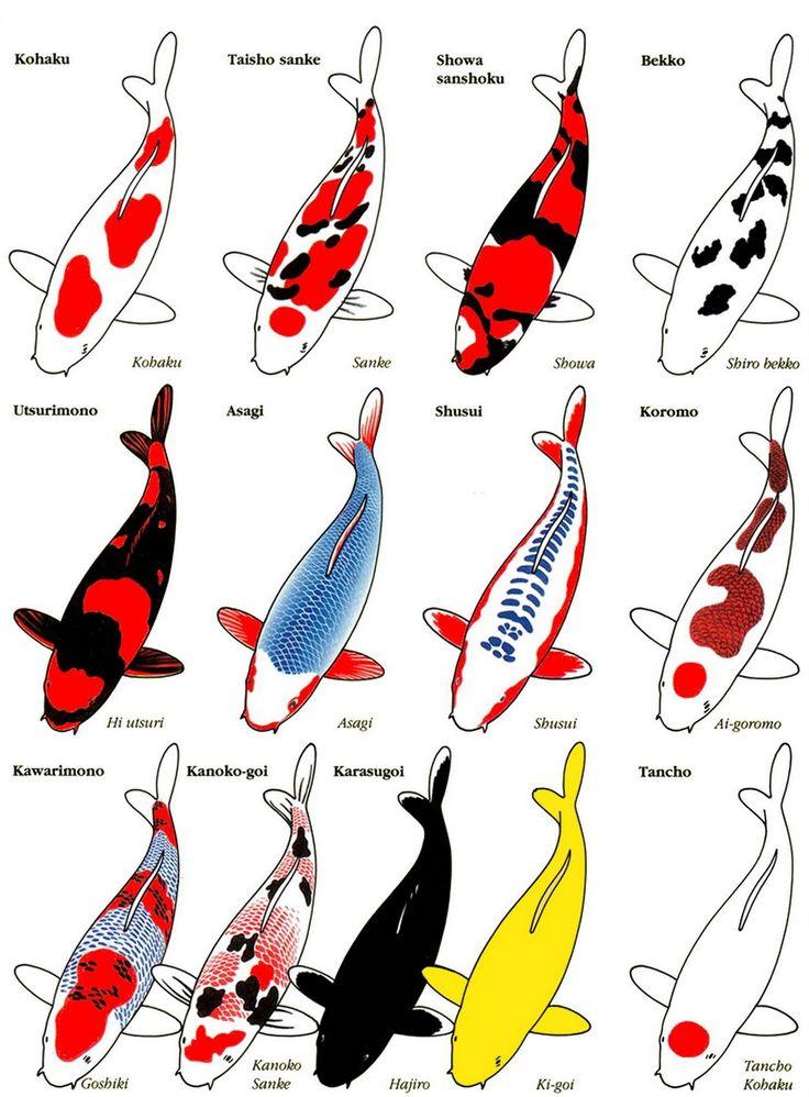 Koi identification poster animals pinterest for Koi fish poster