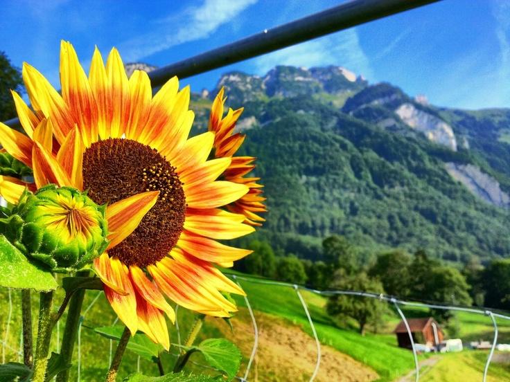 Desde la montaña! Suiza