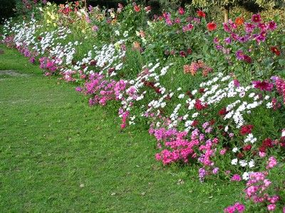 Beautiful flower bed tiptoe through the tulips with me for Beautiful flower beds