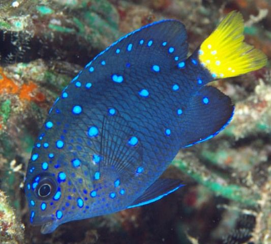 Pin by jeana on swim the sea 39 s pinterest for Live saltwater fish