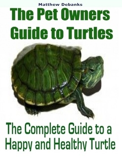 Turtles have long been a favorite pet. However you do need to keep in ...