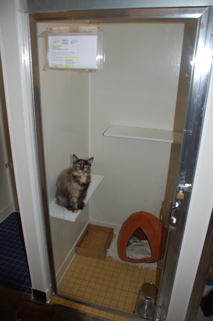 Housing Description Individual Cat Housing What We Love