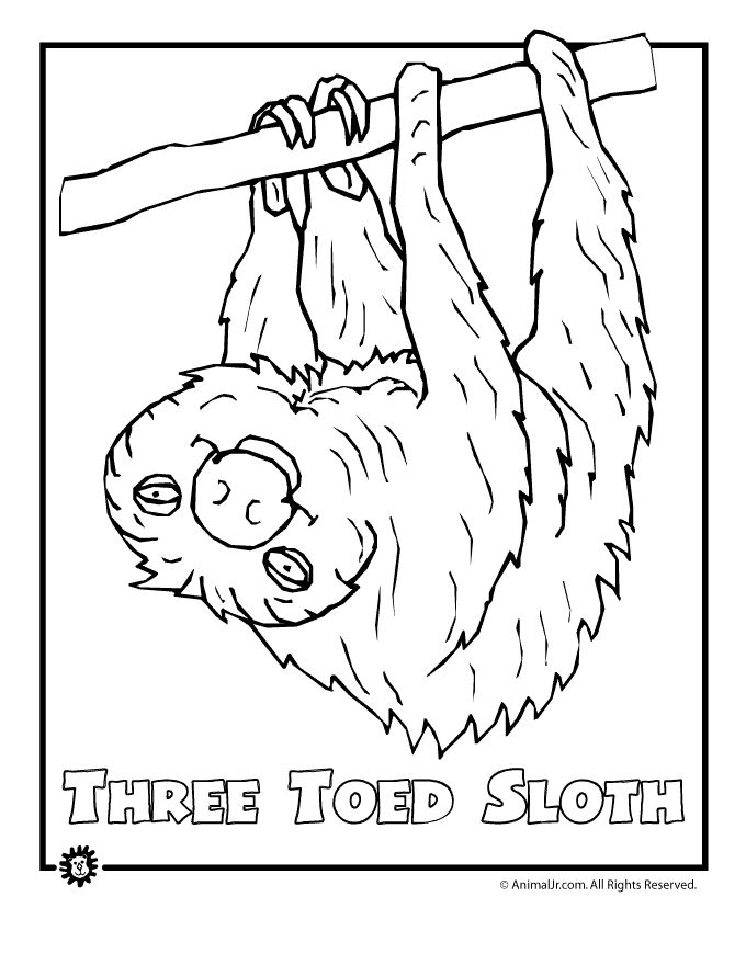 colouring pages of endangered animals most endangered rainforest animals coloring pages