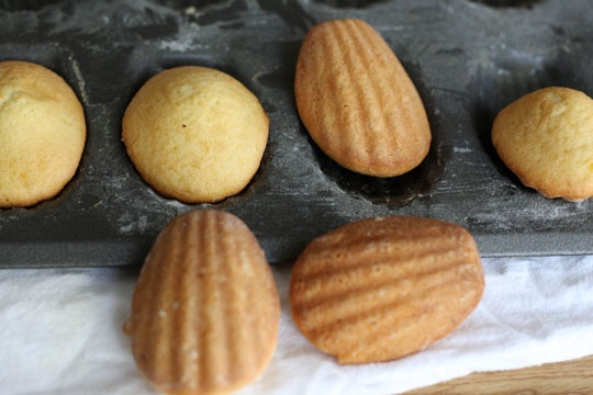 Lemon Glazed Madeleines   Cookies   Pinterest