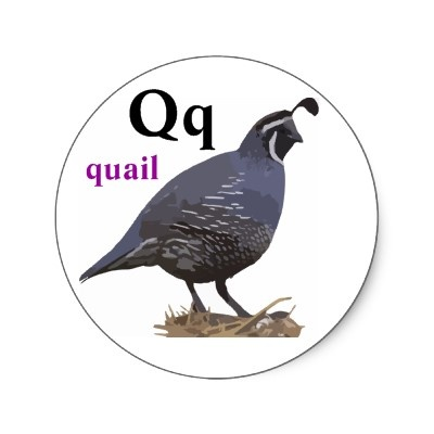 q is for quail  Letter Q is for
