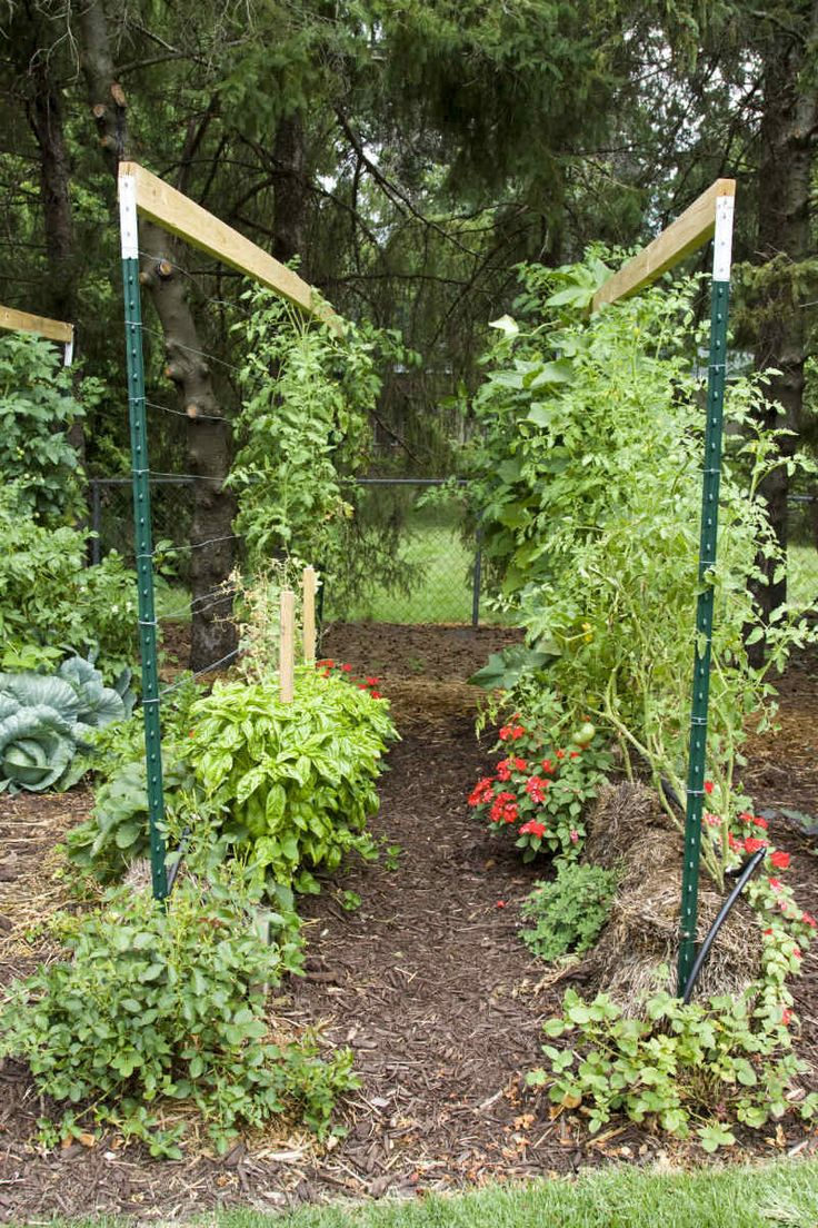 how to build a straw bale garden homesteading pinterest