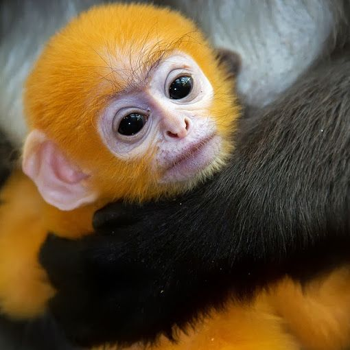 Really cute monkeys pictures - photo#16