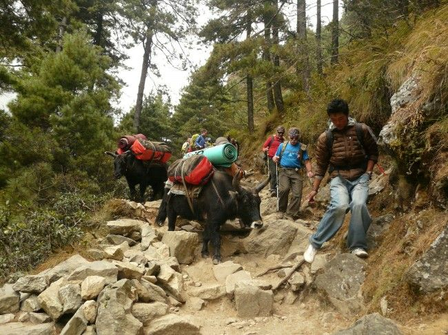 Trekking To Ama Dablam Base Camp  Part 2Ama Dablam Base Camp