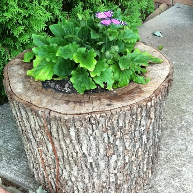 flower pot made out if an old log gardening pinterest