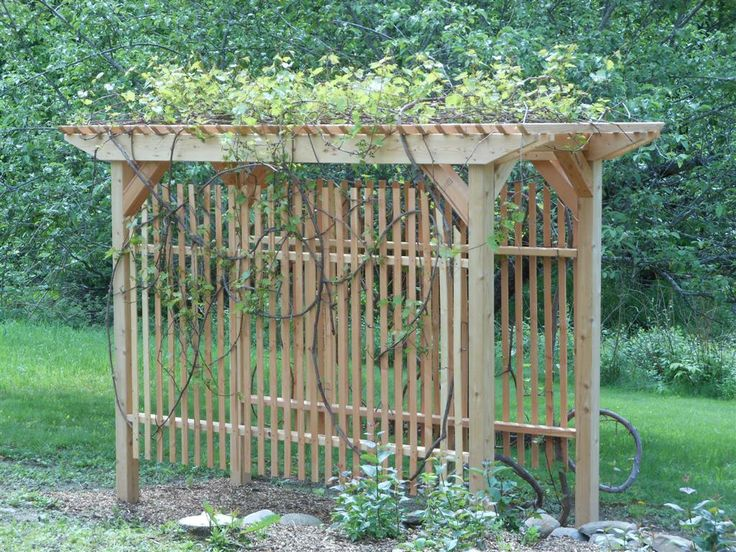 grapevine trellis designs | my husband built two of these to try to ...