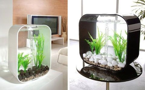 Cool fish tank. Cool fish tanks Pinterest