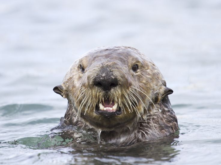 Waterlogged Otter Is Surprised to See You - March 15, 2012