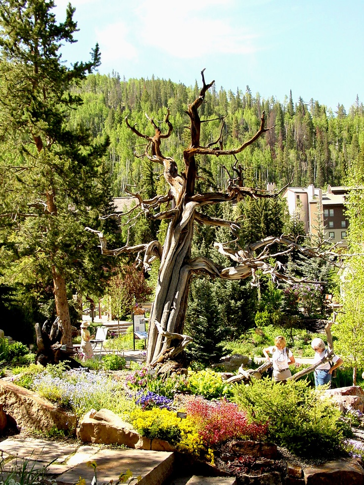 betty ford alpine gardens vail co. Cars Review. Best American Auto & Cars Review