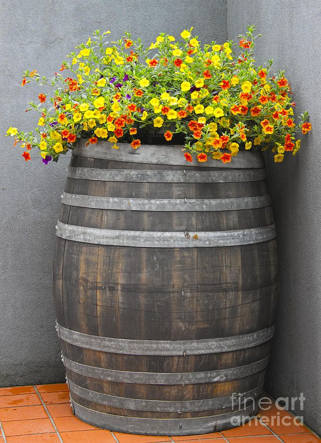 wine barrel planter print by david buffington