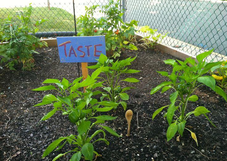 sensory garden for preschoolers sensory garden pinterest