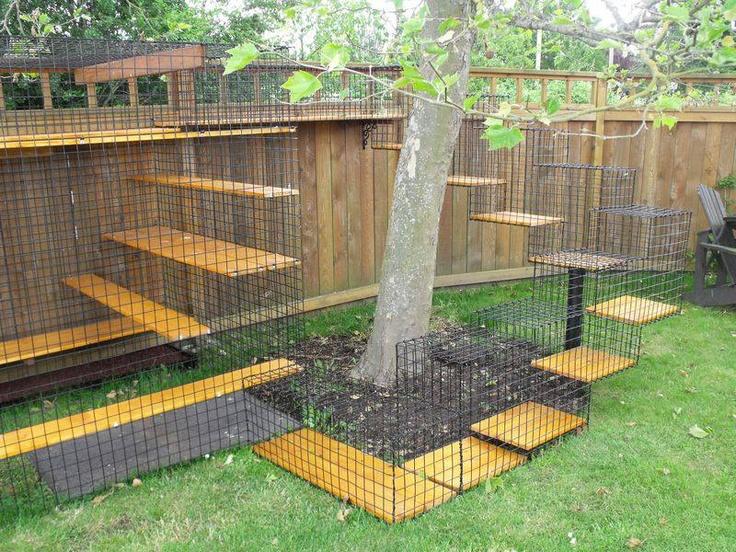 Outdoor cat activity center household joy pinterest