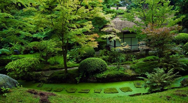 Japanese garden japanese garden designs pinterest for Plants found in japanese gardens