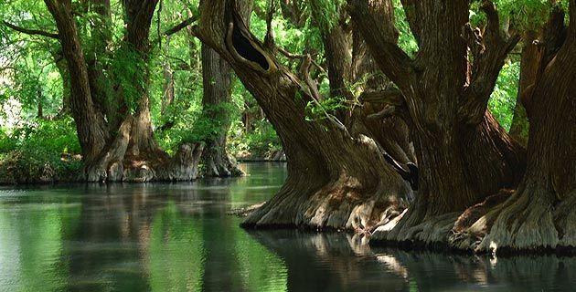 Fotos de la semana: Cenotes, lagos, lagunas y ríos de México | México Desconocido