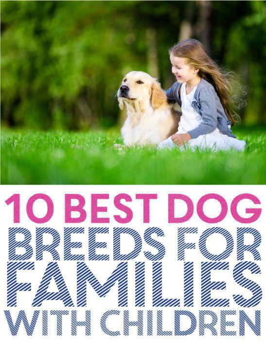 10 best dog breeds for families with children - Best dog breeds kids ...
