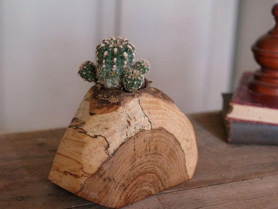 Rustic cactus pot indoor plant holder reclaimed wood for Wooden cactus planter