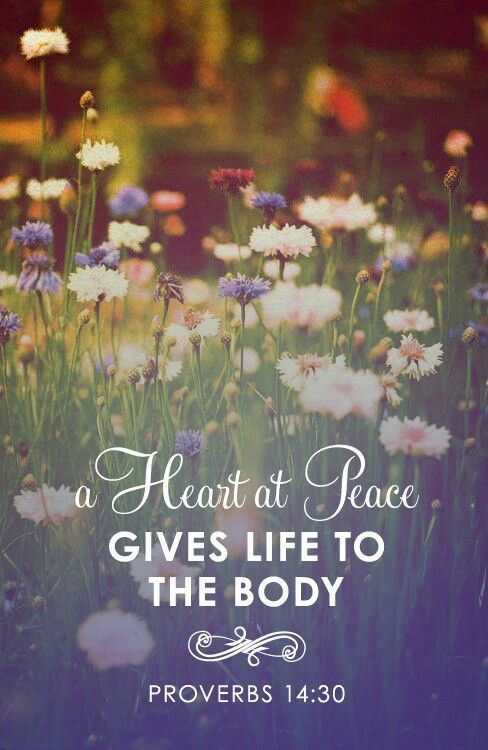 A heart at peace gives life to the body. [Proverbs 14:30]