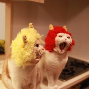 Wigs For Kitties 118