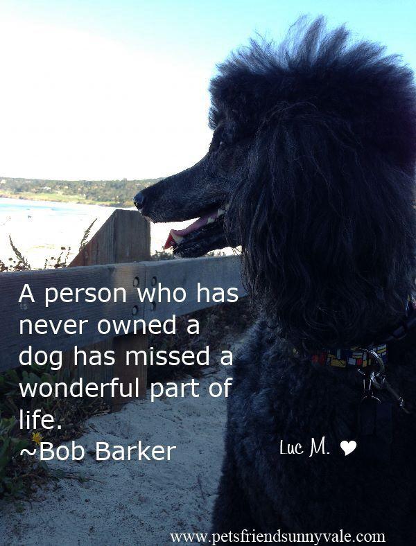 Mε τι αντιστοιχεί ένας σκύλος;