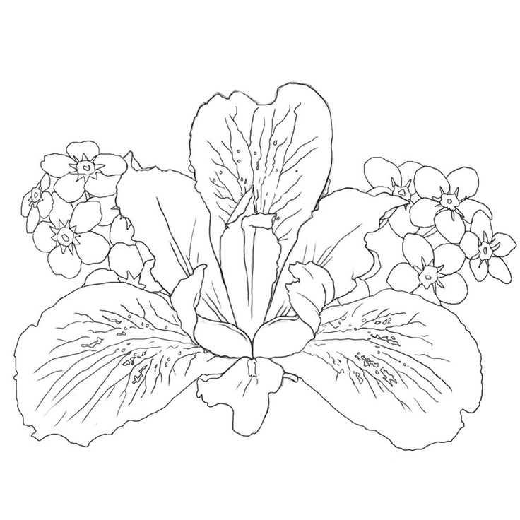 Line Drawing Iris Flower : Iris i really like the fine lines my tattoo obsession