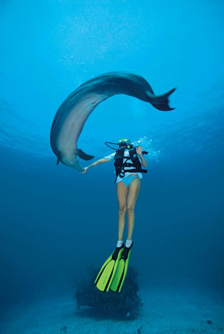 With the dolphins scuba diving hawaii christi 39 s dolphins pinter - Dive in scuba ...