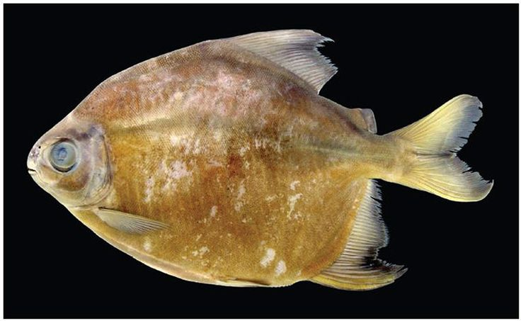 Pin by Artstamper1 on Freshwater Living