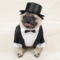 Extremely dapper