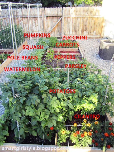 Counter Height Vegetable Garden : Outdoor+Vegetable+Garden+Boxes Box Vegetable Garden: June Update ...