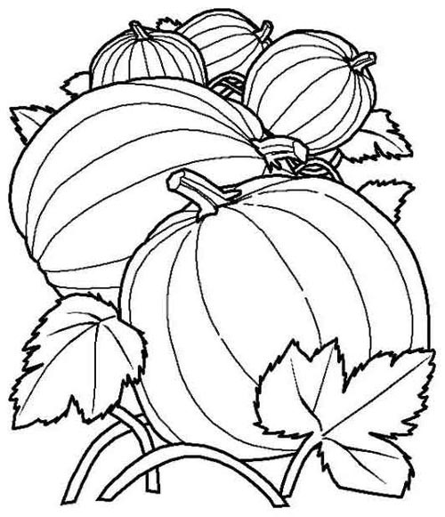 pumpkin patch coloring pages - photo#15